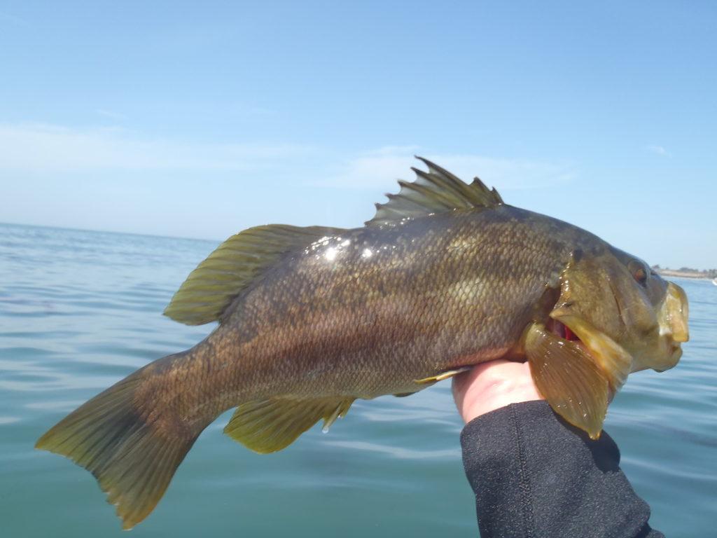 Big Mouth Bass Caught