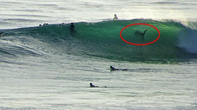 Surfboard Fishing Cult